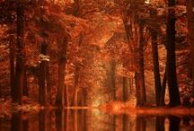 Autumn / by Cacu Gonzalez Llamazares