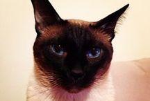 Cat Love / by Ozgun Sonmez