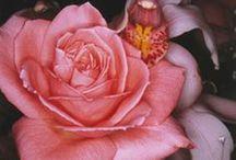 Douce et belle fleur fragile