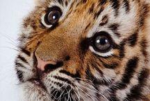 Cute Animals / Animals can be so cute