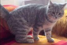 ruchome kotki