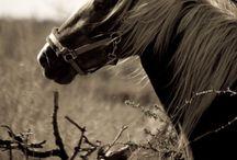 my future horses