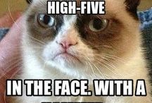 Grumpy cat / Grumpy but funny