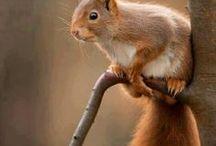 eekhoorn...