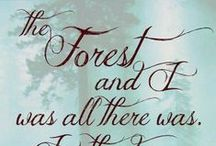 forest ...
