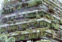 Pflanzen / Die Schönheit der Pflanzenwelt