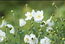 Garden ♥ whites ...