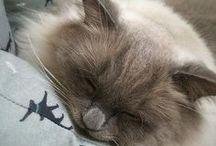 cat ♥ brown ...