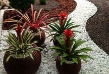 Brom Crazy / Bromeliads from around the world / by Debbie