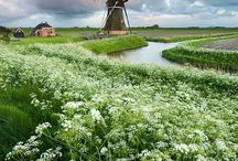 Dutch!!!