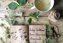 Herbs / Plants with leaves, seeds, or flowers used for flavoring, food, medicine, or even perfume.