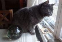 cat and window / kissat