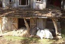 Schweinchenideen