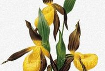 Nature Prints in Cross Stitch / Studies of flowers, birds, and more.