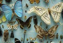 BYTTERFLIES - DRAGONFLIES