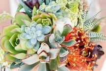 Currently Craving: Succulents / Whether They Are the Feature of Your Florals or Just an Addition, Succulents Have a Way of Freshening up Any Arrangement!