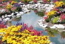 Flowers/ Plants... / by Corina Quattrochi