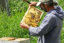 Bees and their Beekeeper! / Beekeeper and his Honey Bees