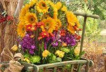 piękne kwiaty