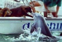Awesome Animal Pics