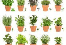 Piante, fiori e giardinaggio