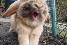 Tender bunnies