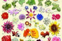 Blüten-Küche