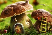 "Magical Mushrooms / ""Nature alone is antique, and the oldest art a mushroom.""