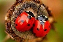 cute little ladybugs  / A small speckled visitor