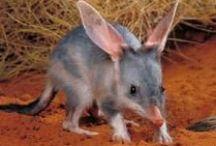Australian wildlife :)