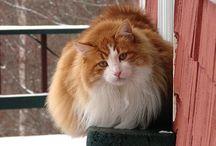 Kitty Kats! / Catscatscats