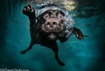 Pets-a-pa-looza / by Jenn Johnson