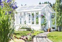 Puutarha ja kukat / Reheviä ja rentoja puutarhoja ja leikkokukka-asetelmia. Flourishing and relaxed gardens and flower arrangements.