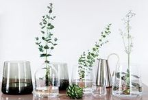 plants / flora