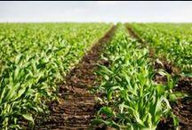 Landwirtschaftliche Buchstelle / Artikel und Informationen zum Thema Landwirtschaft, erneuerbare Energie, Förderung und Finanzierung sowie Steuerberatung und Buchhaltung für Landwirte