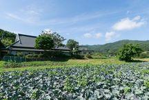 Village Ina garden ideas / Change farm field into comfortable garden