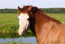 Pony Photo's