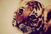 Cute Animals..