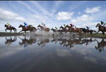 Festivals / The Irish racing calender is highlighted by its many festivals, from The Curragh's Derby meeting in high summer to Leopardstown's Christmas Festival, there is something for everyone. / by Horse Racing Ireland - goracing.ie