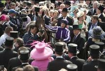 Stars of Irish Racing / by Horse Racing Ireland - www.goracing.ie