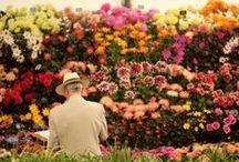 Jardins / jardins do mundo e...de casa!