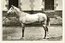 Racing History  / by Horse Racing Ireland - goracing.ie