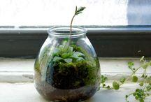 sweetness . in . a . jar / by Jessie Fields