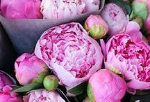 Blooms / Flowers and plants that I love - especially white tulips, ranunculus, hydrangea, and peonies. / by Katie Armour