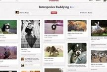Power Pinners to follow / Inspired Pinterest folk to guide me!