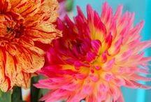 Flowers / by Kristine Cheeseman
