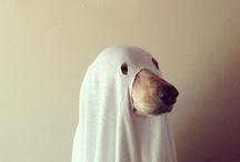 i . put . a . spell . on . you / Halloween / by Jessie Fields