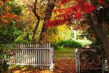 Fall-ing in love with autumn...