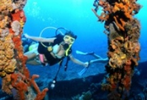 Scuba Diving/Snorkeling / Explore the secrets that lie below the surface.  Countless reefs, towering coral pinnacles, underwater caves, lava tunnels, canyons, massive boulders and grottoes are strewn across this vast submerged shelf, creating a choice of dive sites that range from shallows for the novice snorkeller to dramatic sea caverns and extraordinary shipwrecks for the experienced scuba diver.  -For more information, please visit our website: www.bvitourism.com