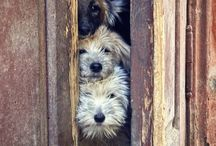 Have u met my dogs